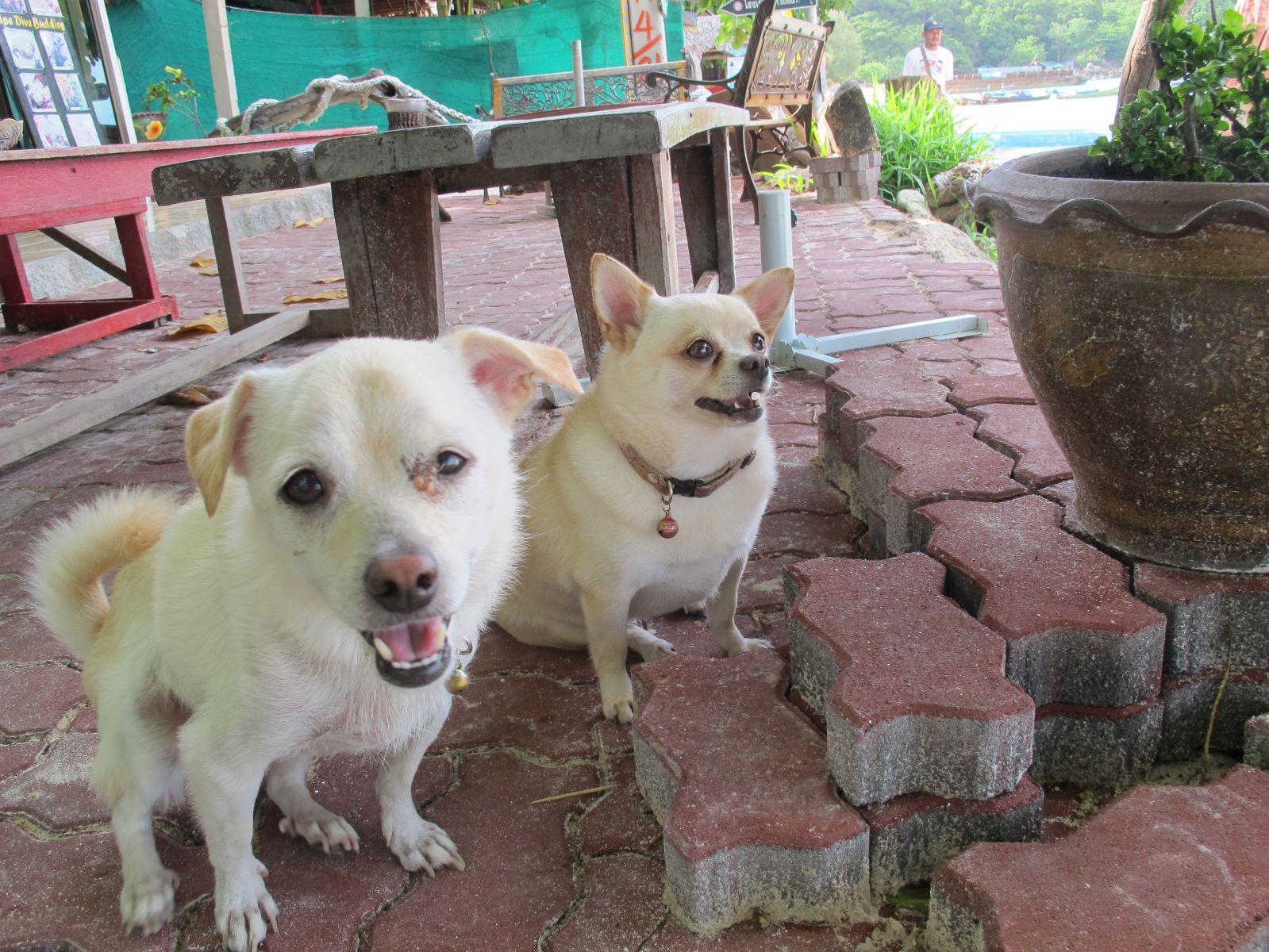 Koh Lipe собаки