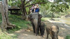 Верхом на слонах