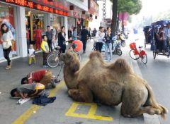 верблюд с уличными попрошайками на улице Китая