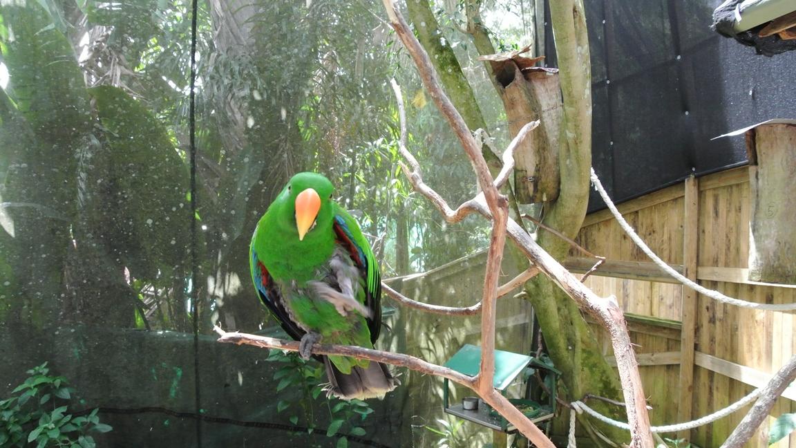 Кернс, Австралия, попугаи