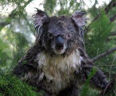 Australian funnies