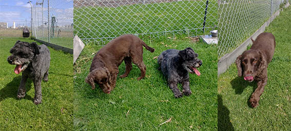 Cat And Dog post entry quarantine services Spotswood, In Melbourne, Victoria 5