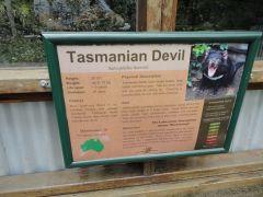 1 Брисбен Тасманский дьявол.jpg
