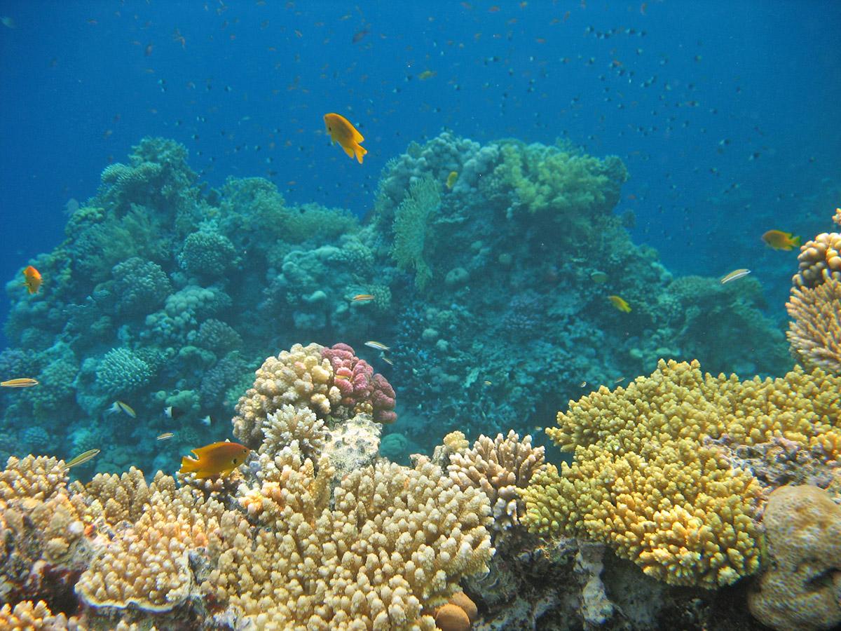 potryasayuschie-korally-krasnogo-morya.jpg