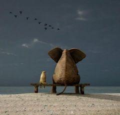 Слоник с другом