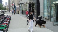 Montreal city 22.jpg