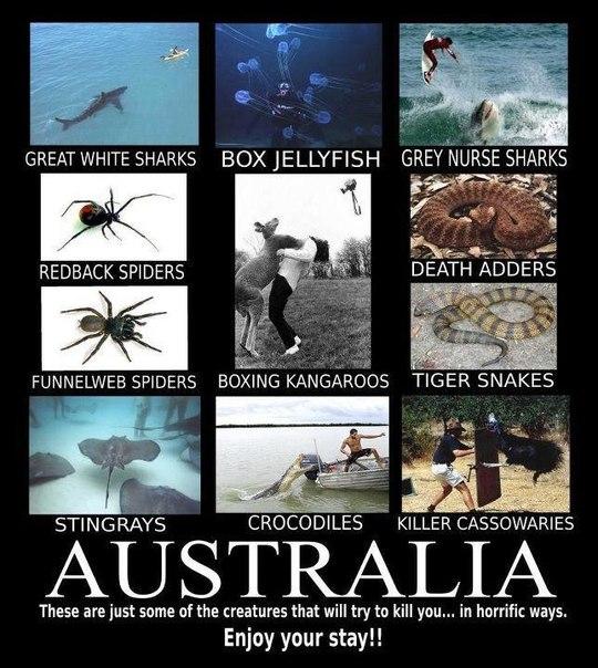 Россия - Австралия