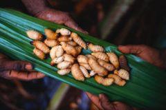 Шашлык из личинок жука-усача