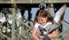 Австралийская девочка и голуби