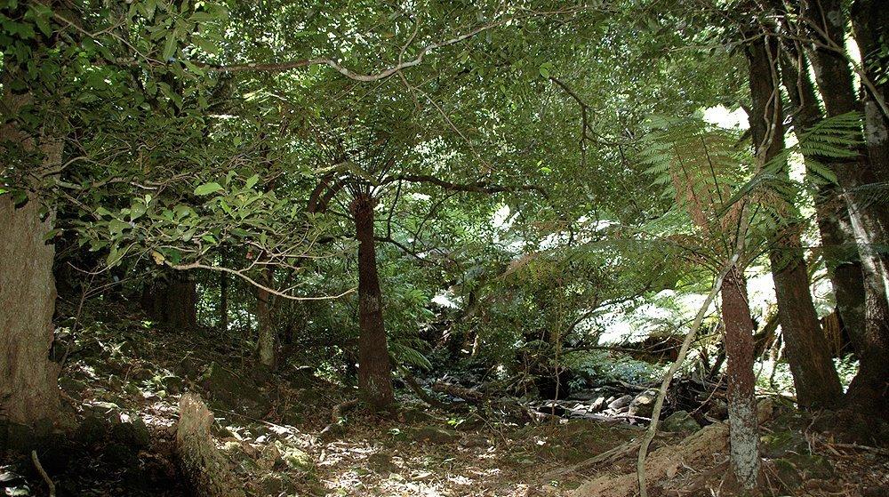 Джелонг, Австралия, Forest floor, Minnamurra Creek, Knights hill