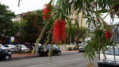 Wollongong 10