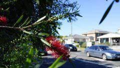 Woy Woy, New South Wales, Australia 4