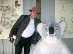 Melbourne Koala