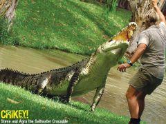 Crocodile Hunter Steve Irwin 2