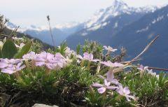 Chilliwack nature 3