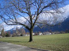 Швейцария Гринденвальд