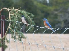 Росперсонал отзывы   Kitchener Waterloo, Ontario, Canada   Eastern Bluebird