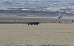 Росперсонал отзывы, Moose Law, Saskatchewan, Canada 13