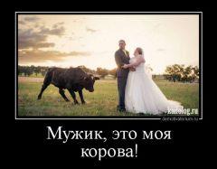 Это   моя корова