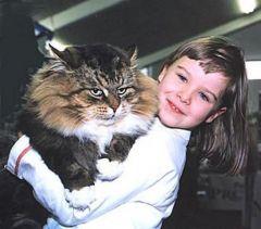 Детство   это когда твой кот старше тебя!