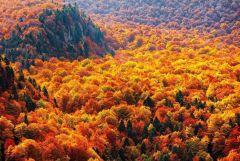 Осенний лес в Балканских горах, Болгария