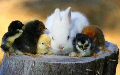 Кролик и друзья