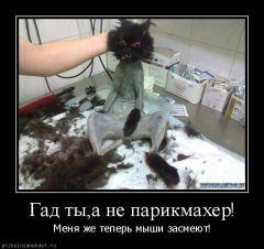 Гад ты, а не парикмахер