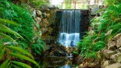 George Brown Darwin Botanic Gardens.jpg