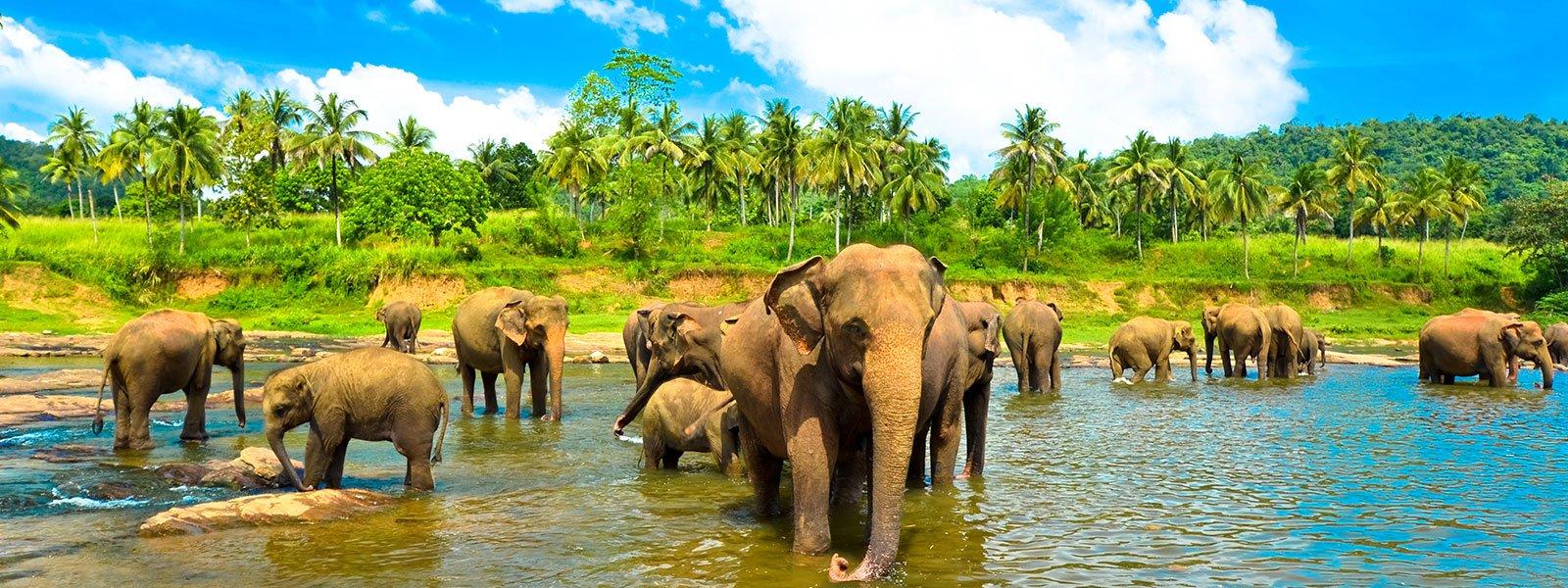 large.58c214b2b03d9_AluthAvurudda(Sinhal