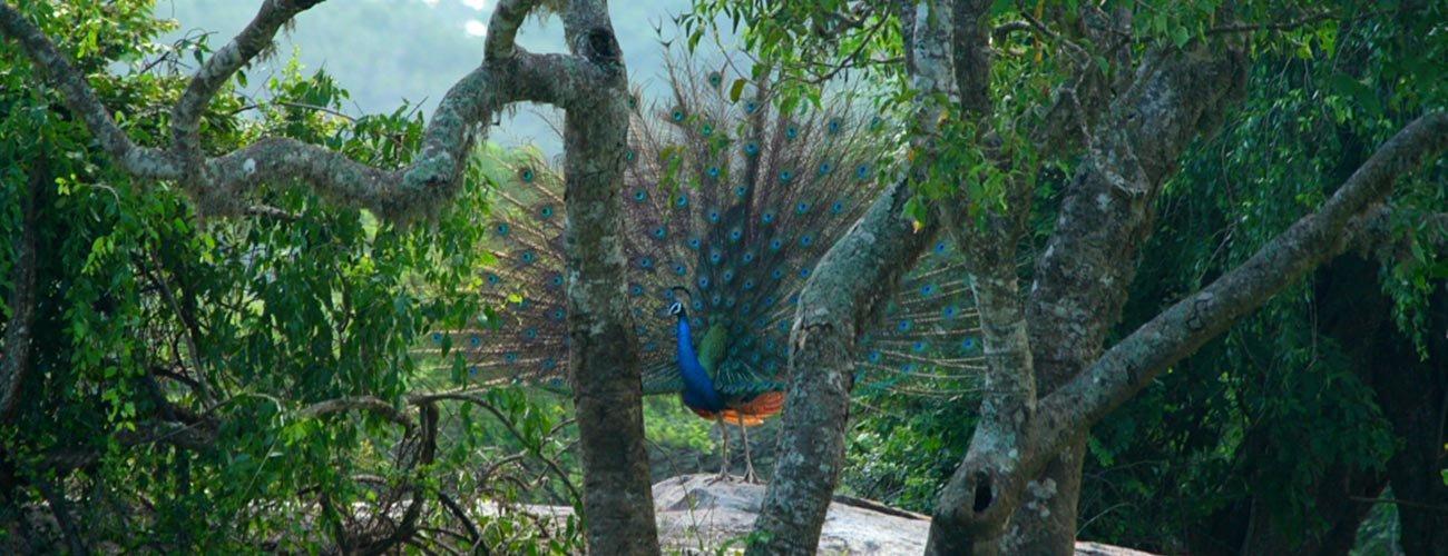 large.58c214b5932cf_AluthAvurudda(Sinhal