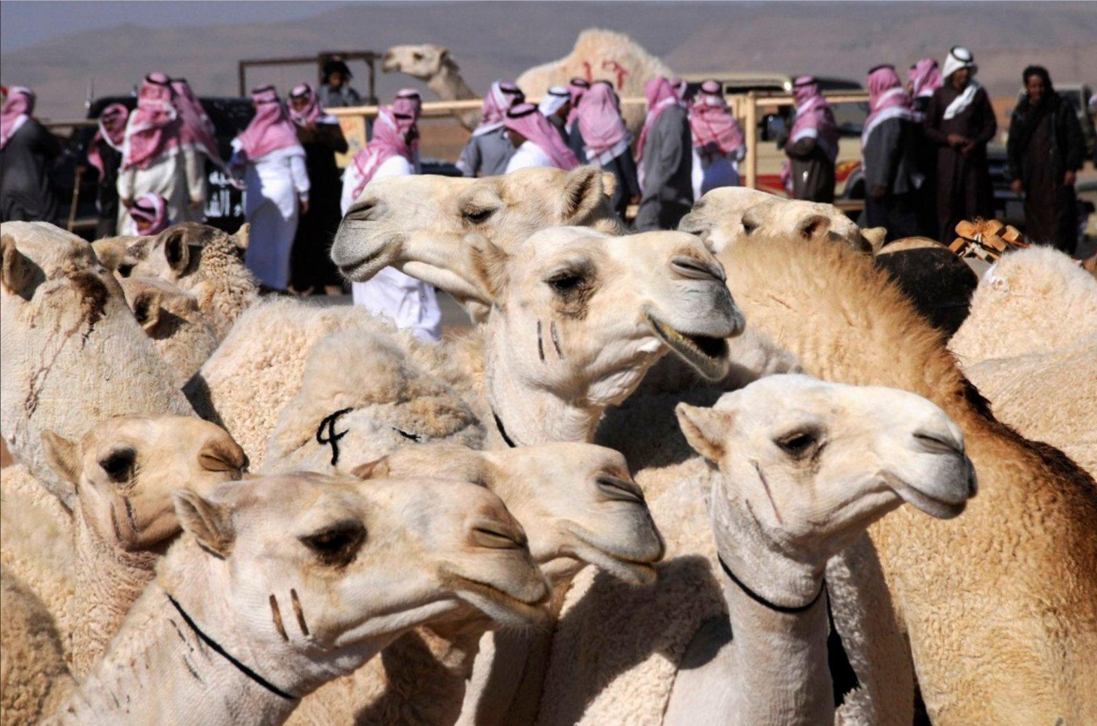 Саудовские красавцы