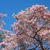 Aluth Avurudda (Sinhalese New Year) Новый год в Sri Lanka, дикая природа Window to Nature