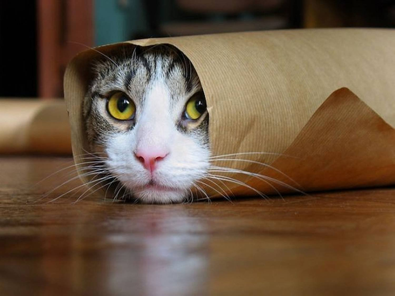 Прикольный кот в картинках, баню
