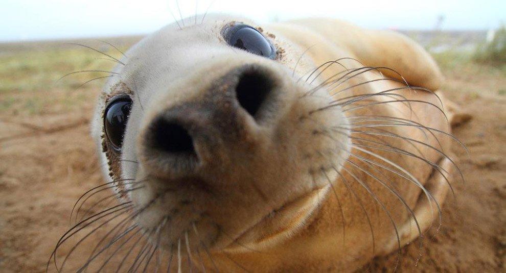 Открытки рождением, прикольный тюлень картинки