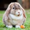 В мире животных: кролик