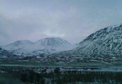Исландский лес... тот самый, что по колено