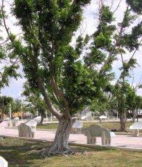 Южное дерево