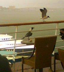 Чайки на палубе