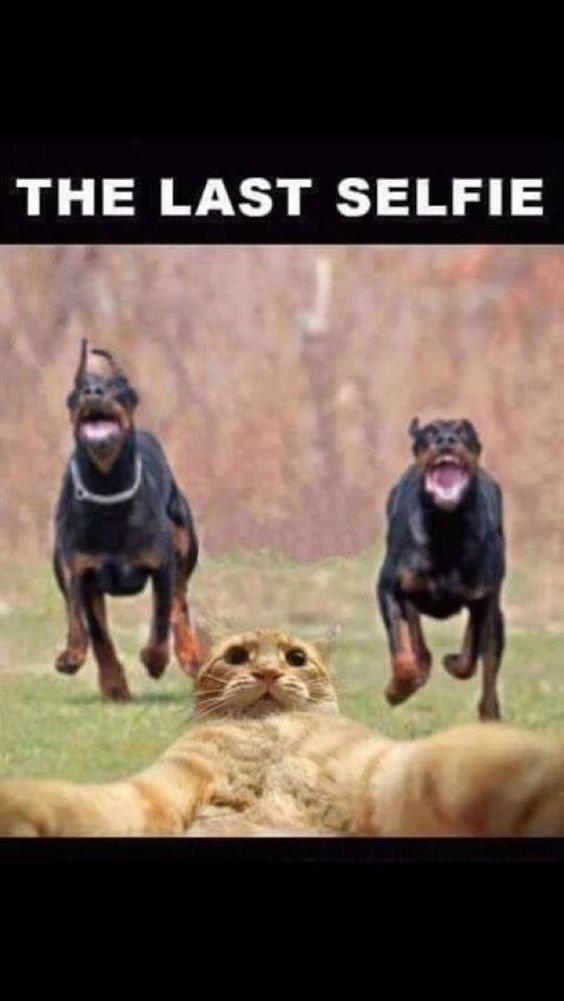 The last selfie.jpg