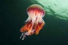 интересный-факт-о-медузах-2-min.jpg