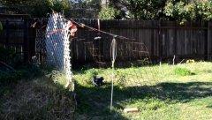 Backyard, Russkaya semya v Australia, rospersonal, otzyvy, Evgeny Matveevich Mikhaylov, Immigration Agent Australia 13.jpg