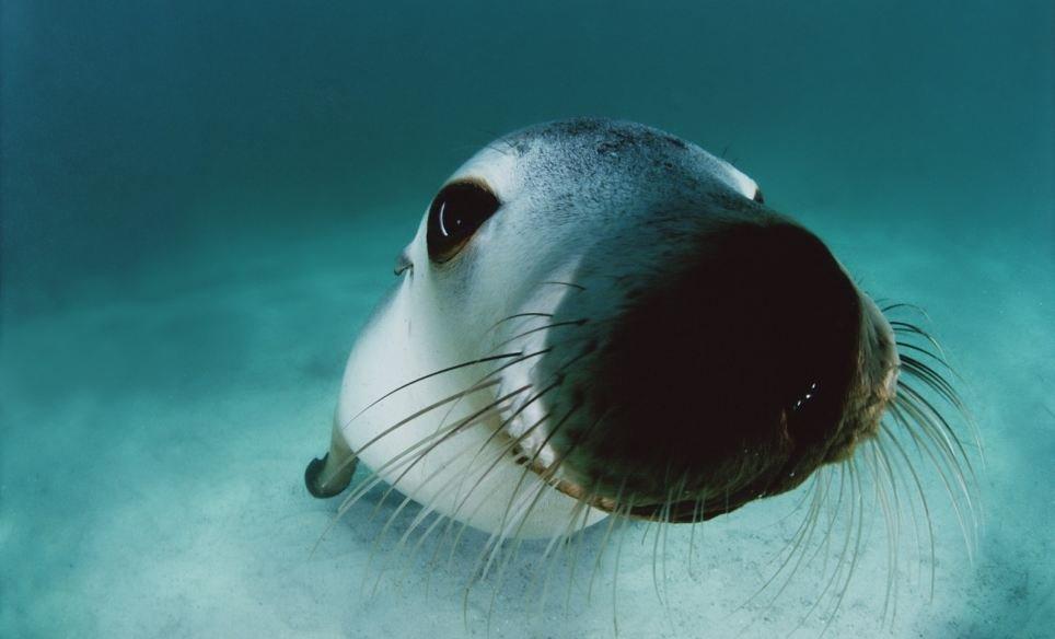 Australian Sea Lion, Babushki letyat v Avstraliyu, rospersonal, otzyvy, Evgeny Matveevich Mikhaylov, Immigration Agent Australia 33i.jpg