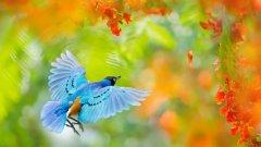 Australian Parrot Grass, Babushki letyat v Avstraliyu, rospersonal, otzyvy, Evgeny Matveevich Mikhaylov, Immigration Agent Australia 33j.jpg