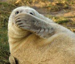 В мире животных - 'это не я - сорри!'.jpg