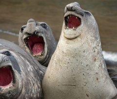 В мире животных - хор.jpg