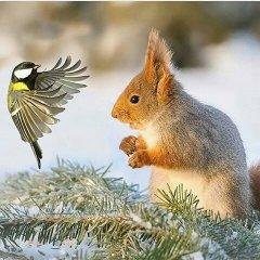 В мире животных - это любовь.jpg