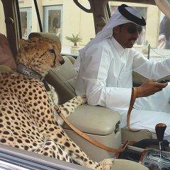 Домашние живтные Дубая.jpg