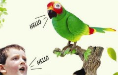 Parrot and Overshadow.jpg