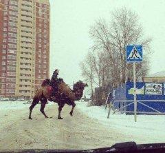 А тем временем в далёкой России 1101.JPG