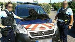Во Франции полицейские «поймали» плюшевую пантеру.jpg